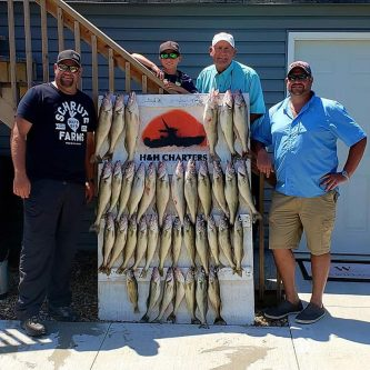 H&H Walleye Charter Lake Erie Fishing Report