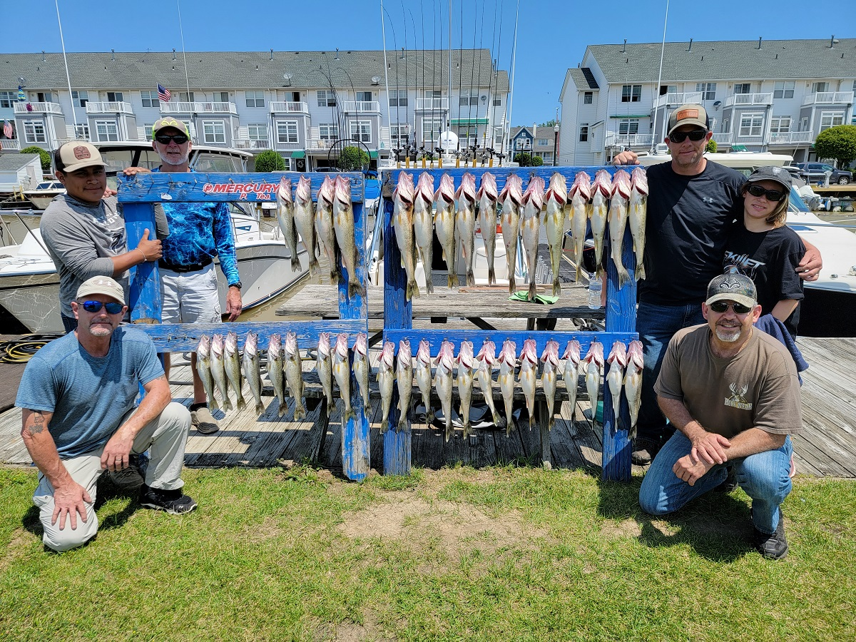 Blue Dolphin Charters Lake Erie walleye report